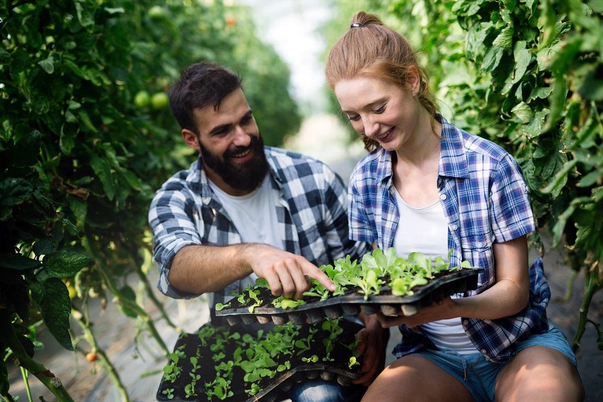 pareja con plantas en huerto urbano